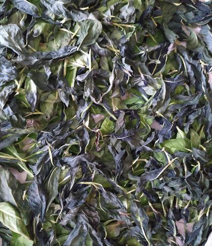 Hojas-persicaria-secas